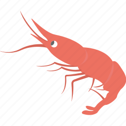 marine creature, prawn, sea life, seafood, shrimp icon