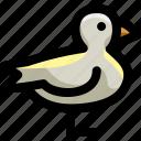 animal, bird, fly, nature, ocean, sea, seagull