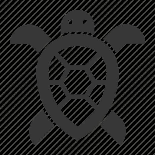 aquatic animal, ocean, ocean animal, turtle icon