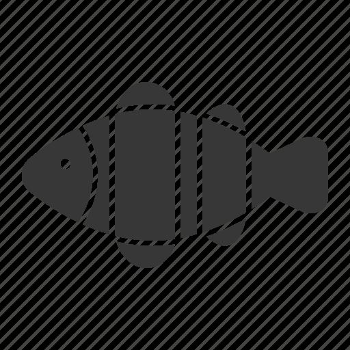 aquatic animal, clownfish, fish, ocean, ocean animal, sea icon