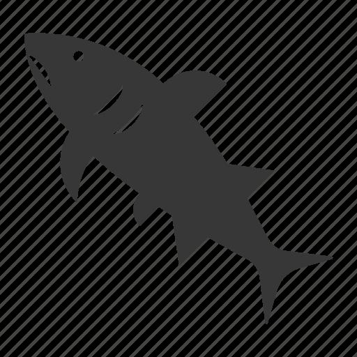 aquatic animal, fish, ocean, ocean animal, sea, shark icon