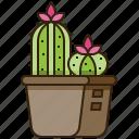botany, cactus, desert, mexican, plant icon