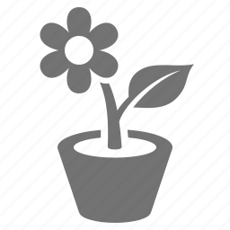 daisy, decoration, flower, growth, plant, pot, potted icon