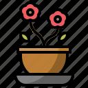 flower, gardening, nature, plant, pot