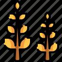 food, grains, wheat, wheat grain, wheat plant