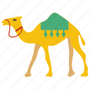 animal, arabian camel, camel, desert animal, riding camel icon