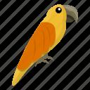 nature, orange, parrot, summer, yellow