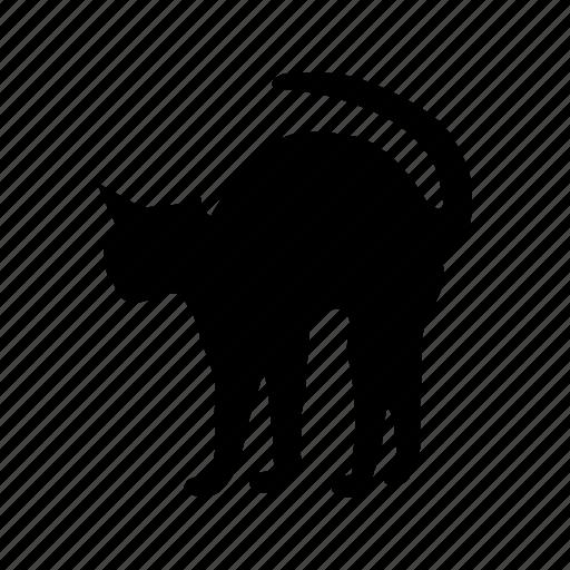 animal, animals, breed, cat, domestic, mammal, pet icon