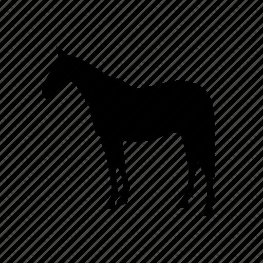 animal, animals, breed, domestic, horse, mammal, pet icon