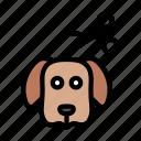 animal, cutting, dog, hair, scissor