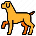 animal, dog, mammal, pet, petshop icon