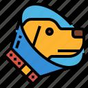 collar, dog, elizabethan, petshop, surgery icon