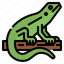 blooded, cold, lizards, pet, petshop, reptile icon
