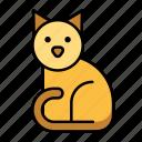 pet, shop, animal, cat, kitty, mammal, petshop