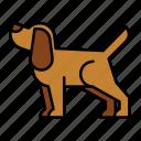 labrador, puppy, retriever, animal, pet, petshop, dog