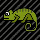 chameleon, lizard, reptile, amphibian, lizards, petshop, animal