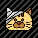 bandage, cat, injury, pain, swathe, pet, veterinary