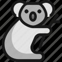 koala, bamboo