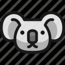 koala, head