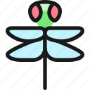 flying, insect, dragonfly