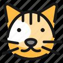 cat, head