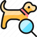 pet, tracking, dog, search
