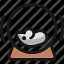 hamster, wheel