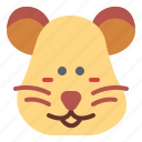 animals, hamster, pet, rodent