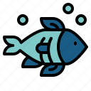 animals, aquatic, fish, life, sea