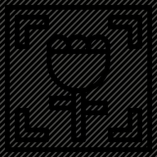flower, macro, multimedia, options icon