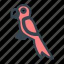 pet, parrot, bird, pirate