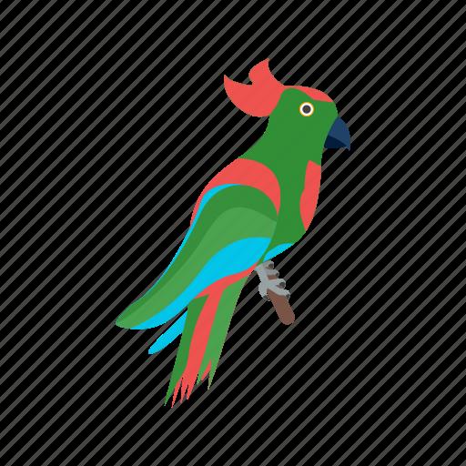 beak, bird, cartoon, colorful, hat, parrot, pirate icon