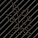 fertilize, add, growing, plant