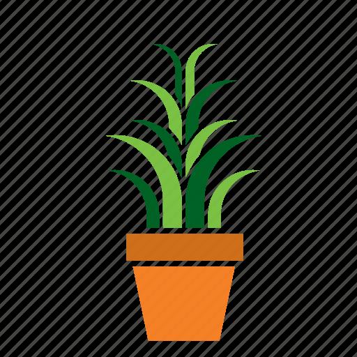 cactus, decoration, garden, nature, plant, pot icon