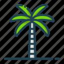 palm, tree, nature, plant