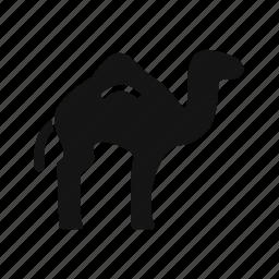 animal, arabian, camel, desert, zoo icon
