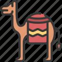 camel, animal, creature, desert, camels