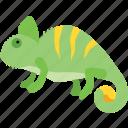 reptile, chamaeleon, chameleon, pet, camouflage, lizard, rango