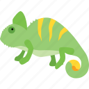 camouflage, chamaeleon, chameleon, lizard, pet, rango, reptile icon