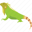 american, green, iguana, lizard, pet, reptile icon