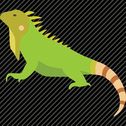 american, green, iguana, lizard, pet, reptile icon