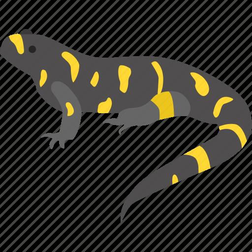 amphibian, mole, ohio, salamander, spotted, yellow, yellow-spotted icon