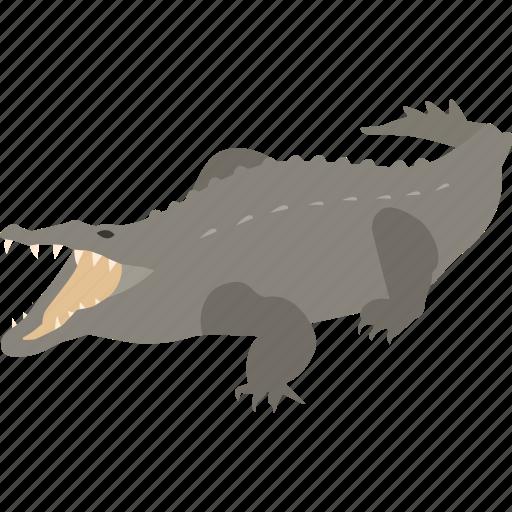 alligator, american, caiman, crocodile, nile, predator, saltwater icon