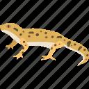 reptile, gekko, lizard, skink, gecko, desert, newt