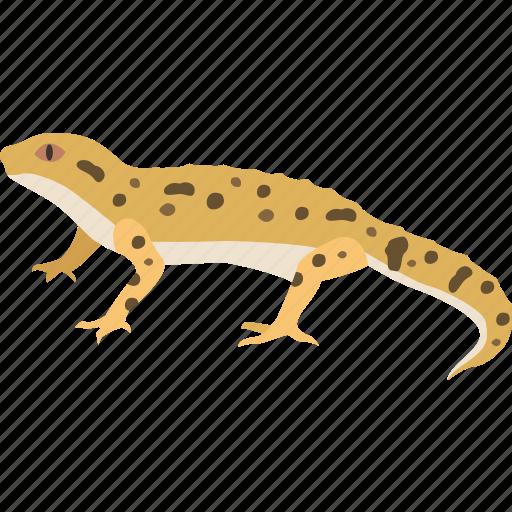 desert, gecko, gekko, lizard, newt, reptile, skink icon