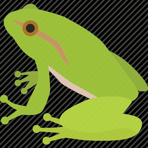 amphibian, bullfrog, frog, green, green frog, pond, prince icon