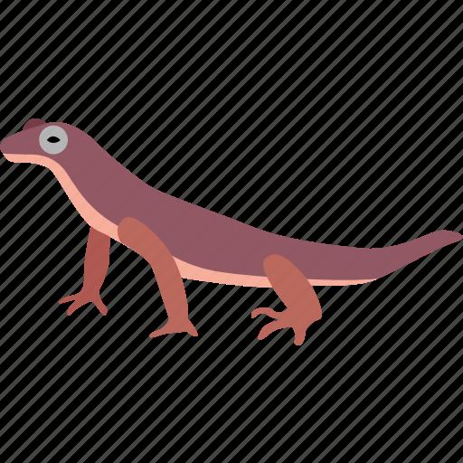 gecko, lizard, newt, reptile, salamander, skink, triton icon