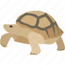 animal, galapagos, galapagos turtle, pet, slow, tortoise, tortuga