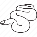 anaconda, boa, constrictor, giant, python, serpent, snake