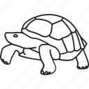 animal, galapagos, galapagos turtle, pet, slow, tortoise, tortuga icon
